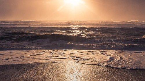 2020-Westland-ocean-outfall_Wagtail.jpg