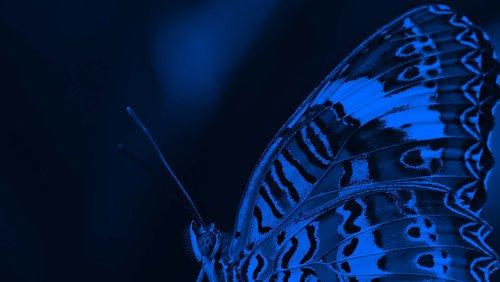 Butterfly TEST