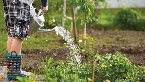 Gardening_SS604815971.jpg