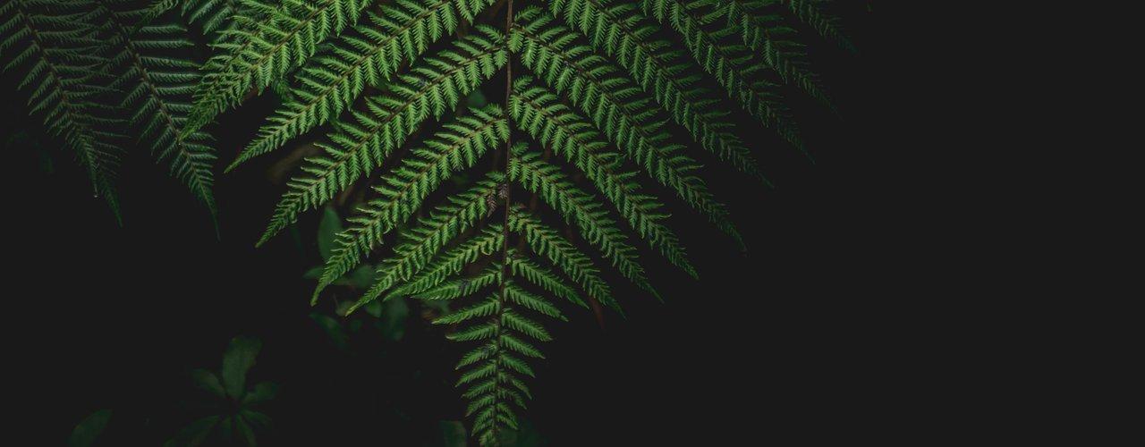 NZ_Plants.jpg