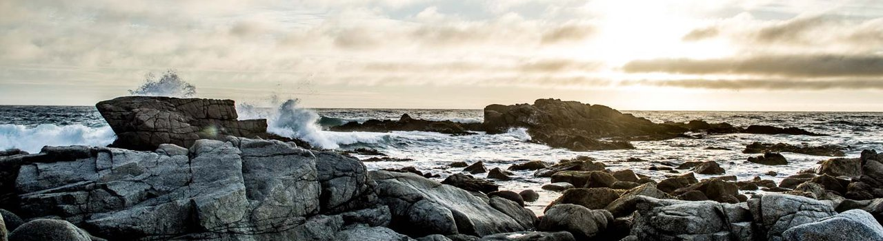 New Zealand Coastal Society